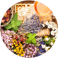 fitoterapia_plantasmedicinais